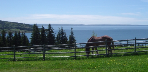 Horse at Highland Village Museum, Iona, Nova Scotia