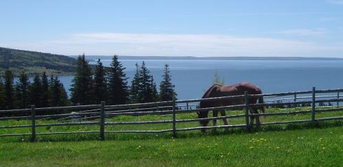 Horse at Highland Village Museum, Iona, Nova Scotia