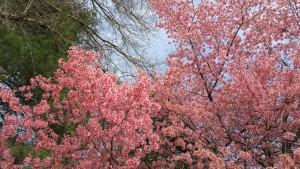 Springtime in the North Carolina piedmont