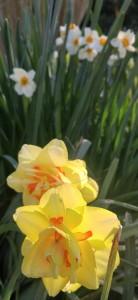 Spring flowers in North Carolina