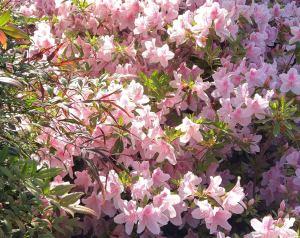 Last spring flowers in NC